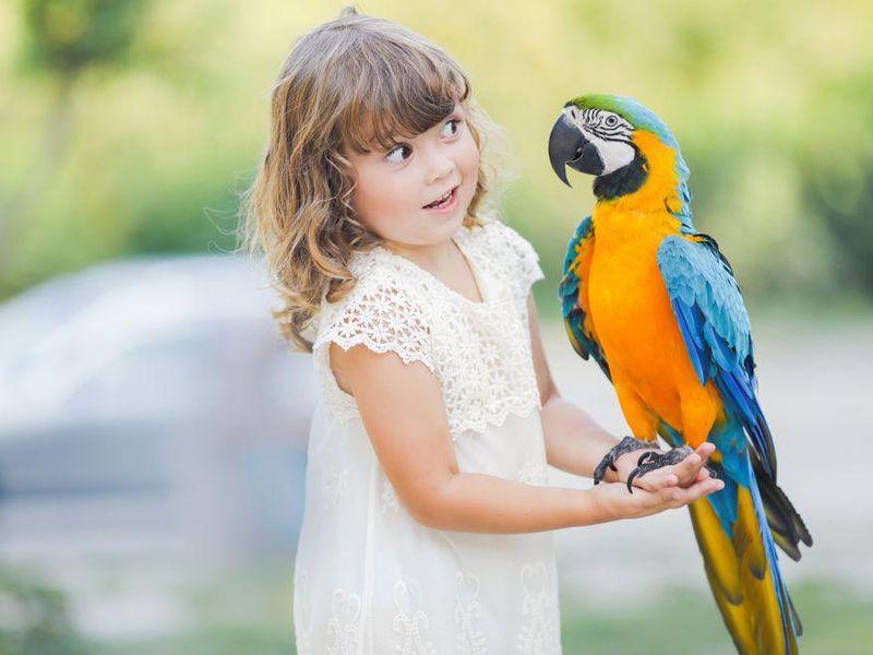Your Brainy Pet Bird Thrives on Stimulation