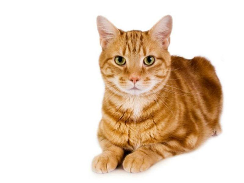 Fur Find: Genes Uncovered Behind Cats' Spots & Stripes