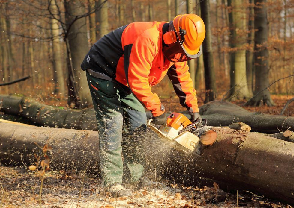 News Picture: Why Logging May Be the Most Dangerous Profession