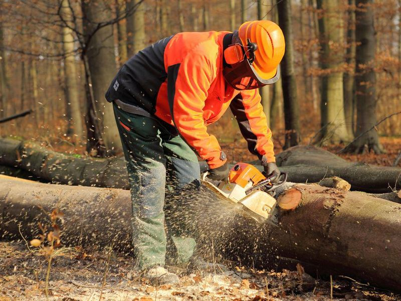 Why Logging May Be the Most Dangerous Profession